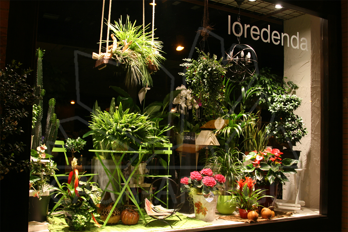 Plantas y jardiner a casa arregui - Jardineria en casa ...