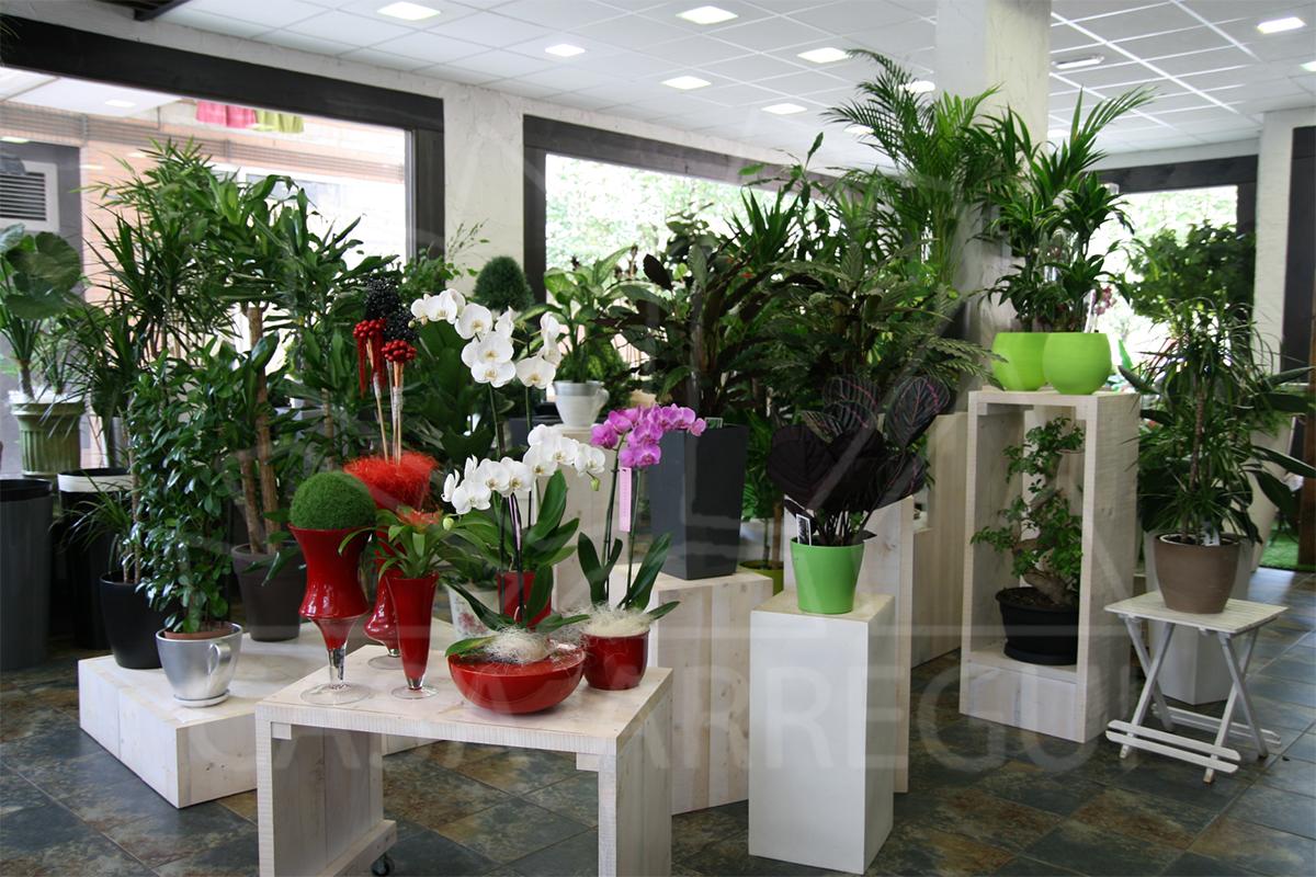 Jardinerie plantes photos de plante jardinerie des for Solde chaise medaillon