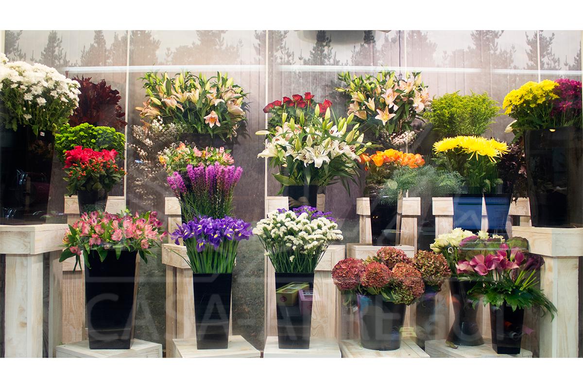 Plantas y jardiner a casa arregui for Adornos de jardineria