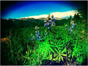 Panomarica primaveral Colorado