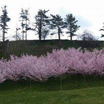 Panoramica primavera