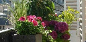 flores-para-terrazas